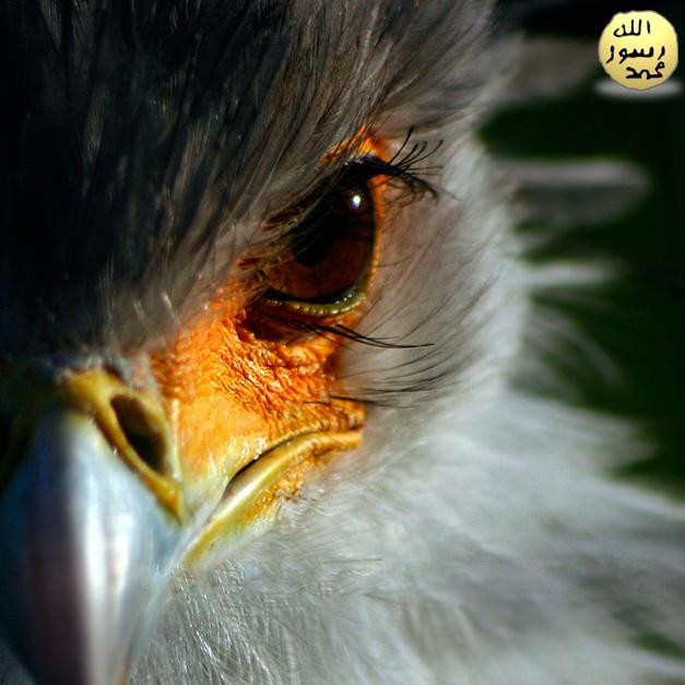Sekreter Kuşu uzun boylu yırtıcı bir kuş türüdür. Sekreter Kuşu'nun uzun bacakları ve kanatları vardır.Tüylerinin rengi siyah,kahverengi ve beyaz tonlar arasındadır.Sekreter Kuşu besin olarak etçildir.