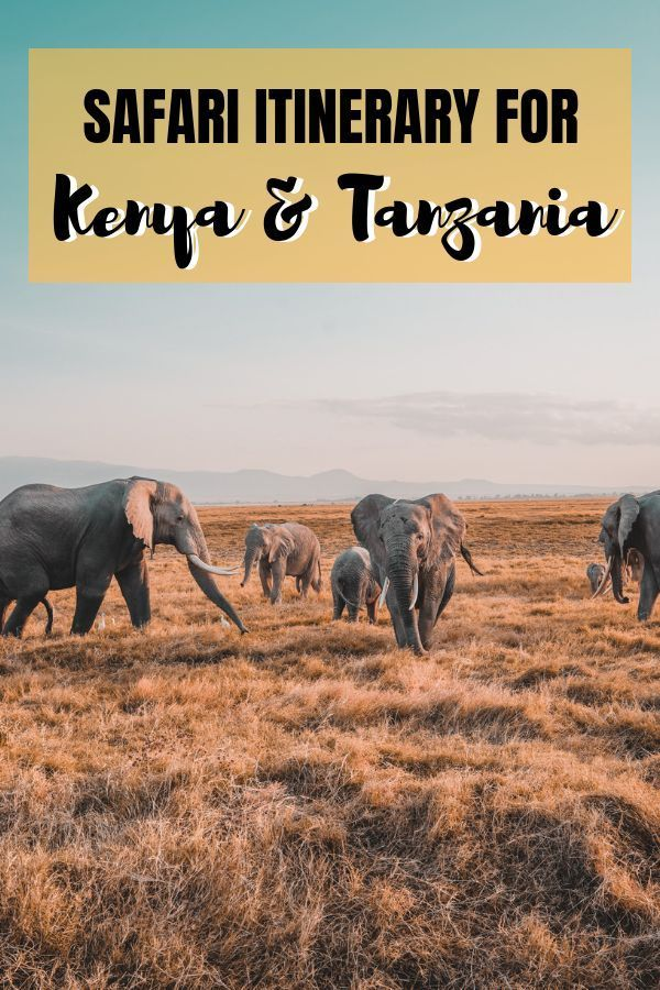 Our African journey: 7-day Safari in Kenya and Tanzania  5