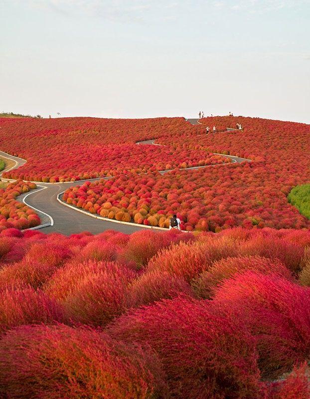 8 Taman Mawar Terindah di Dunia, Mulai dari Jepang sampai