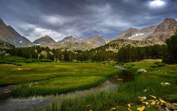 Inyoの国有林、カリフォルニア州、アメリカ、樹木、草、山、雲 壁紙プレビュー