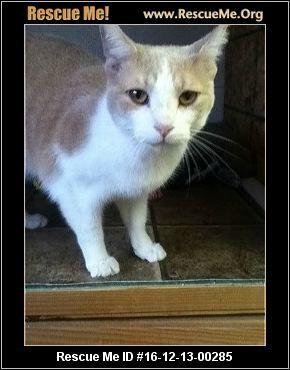 ― Pennsylvania Cat Rescue ― ADOPTIONS ― RescueMe.Org