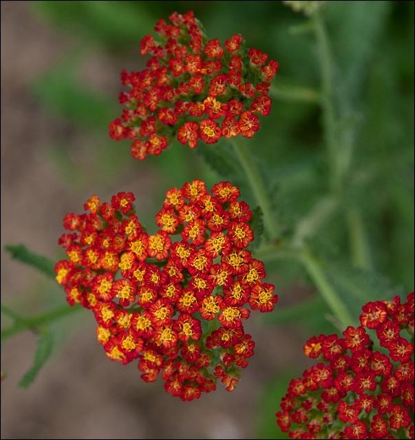 Flower Garden Ideas Colorado 73 best colorado high plains garden <3 images on pinterest