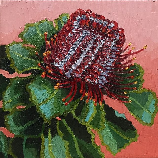 "I've painted 2 of 3 of my #babybloomsseries 20x20cm (8x8"") on mini Duthy Street canvas. This is No. 2 the unique Australian beauty #coccinea. The first 2 are sold. Next up is the pink waratah.  PM if you are interested in having a first look, good price if you join my artist mailing list.  PAINTING Week 1 of 52…"