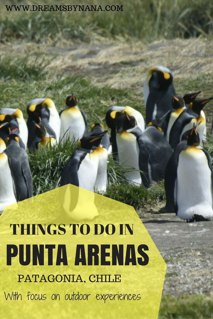 Things to do in Punta Arenas, Patagonia - Chile if you are into outdoor and wildlife experiences!
