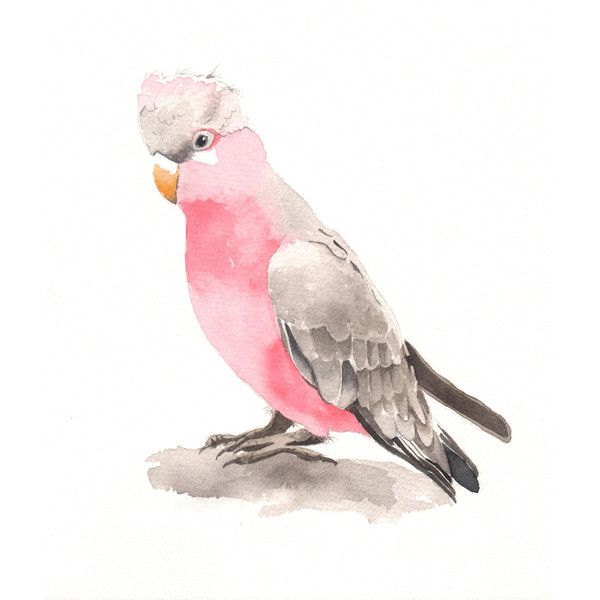 Galah Painting -bird art -wildlife art print of watercolor painting 5... ($16) ❤ liked on Polyvore