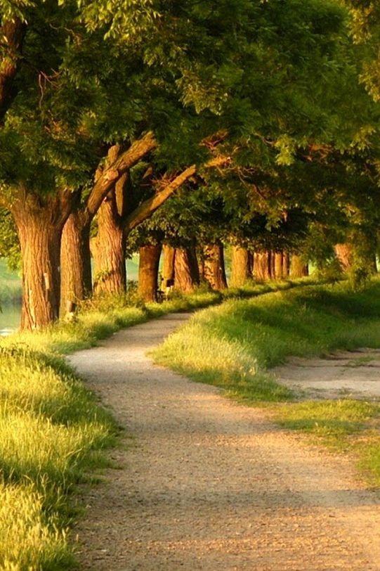 Árvores à beira do caminho.