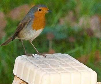 63 best v gel vogelfutter nisthilfen images on pinterest bird food bird houses and birdhouses. Black Bedroom Furniture Sets. Home Design Ideas