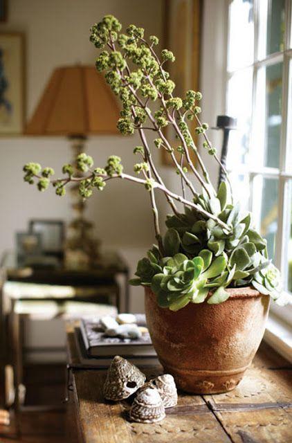 Plantes d 39 int rieur plantes grasses succulentes decor for Plantes d interieur decoration