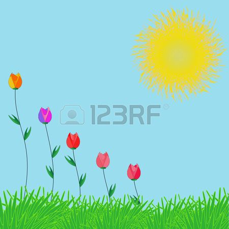 Solar card. The grass, the sky, the sun and the colorful tulips. Summer