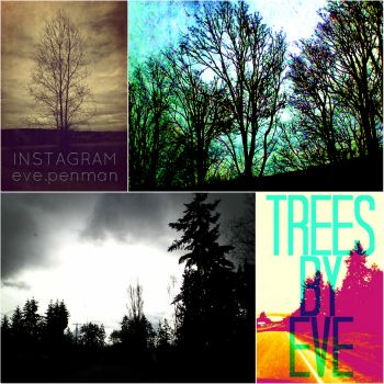 Check out my latest #blogging efforts ~ Trees by Eve: Pacific Northwest Tree #Photography on #Instagram..............#pacificnorthwest #pnw #treephotography #trees #treeporn #skyporn #skyphotography #treebranches #skwimpeaks #treesbyeve #blogspot #blogger #readme