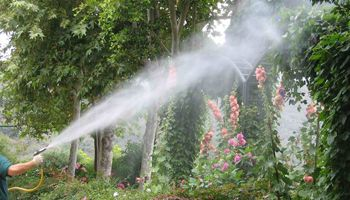 The need to control these insects and pests cannot be stressed enough. We at Dave Tree Service understand your concern and we are pleased to help you by providing our tree spraying services.