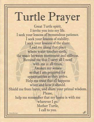Spirit Totem Animals:  Turtle Prayer.