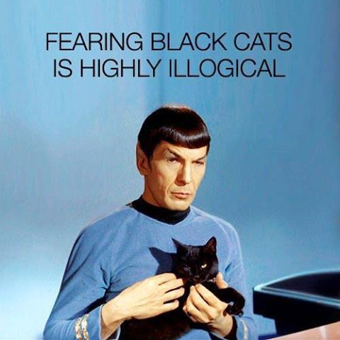 Very true... Here kitty kitty kitty! Anyone have a black cat? :D #startrek #scifi #geek