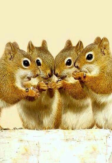 Eric, you drive the getaway car; Sid, you keep lookout; Fred, you distract them, while I pinch their nuts. Right, sycronise watches.