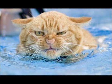 Прикол Кот упал в бассейн. - YouTube