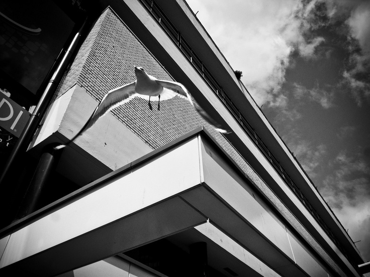 FLYIN'! ~Tomasz Ćwiertnia Photography