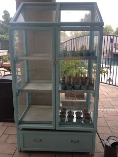 Arizona Garden Girl: My Mini Greenhouse