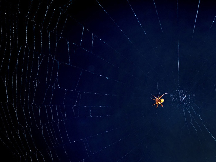 oh_what_a_tangled_web_we_weave-wallpaper