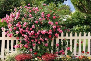 Φυσικό λίπασμα για τα φυτά σας!