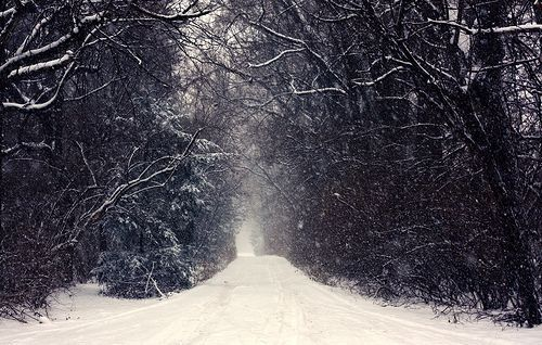 Tips on how to photograph snow. If you wish for the snow flakes to appear clear and sharp, use fast shutter speeds.