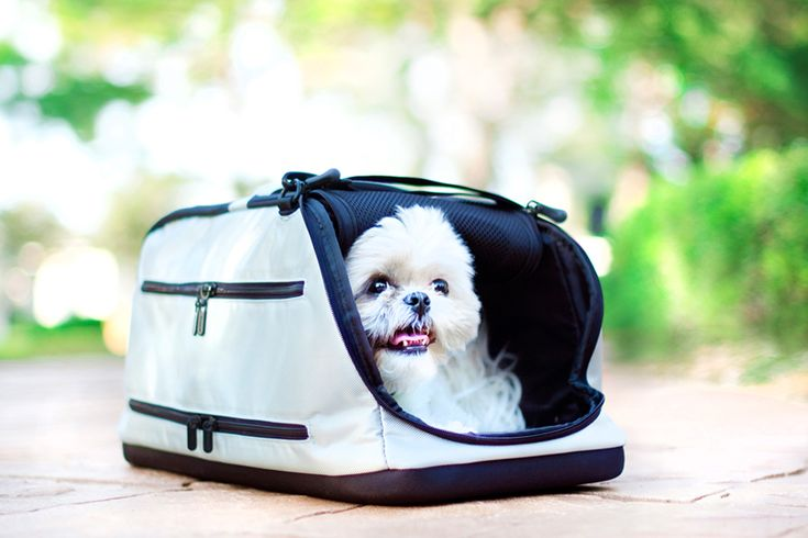 Review: The Sleepypod Air | a perfect option for safe pet travel. Read more for the full review.