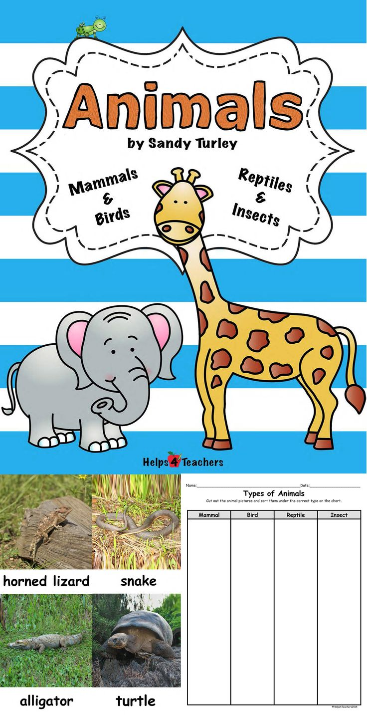 $ AWESOME!!  This packet includes 32 pages of materials that can be used for lessons on types of animals (Mammals, Birds, Reptiles and Insects) and also animal coverings.  It includes: -5  large and 5 small photographs of each type of animal above to use in your lesson.   - Types of Animals sorting activity sheet.   - Fill in the blank activity sheet  and -  Activity sheet for sorting animals by their coverings.  Found at: http://www.teacherspayteachers.com/Store/Helps4teachers