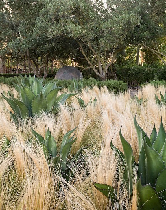 oehme van sweden associates / garden of contrast at cornerstone, sonoma