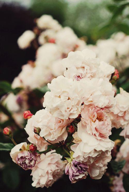 m o r n i n g h e a d a c h e, via Flickr