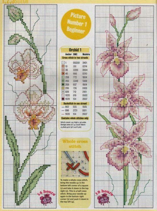 Flores: Belas Orquídeas em Ponto Cruz