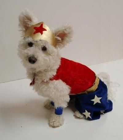 DIY Dog Wonder Woman Costume