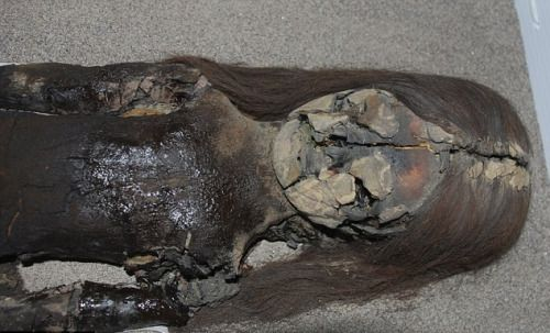 The world's oldest mummies buried more than 7,000 years ago in the arid desert of northern Chile are being turned into black slime by climate change. Scientists have found that growing humidity can cause an explosion of bacteria living on the preserved skin of the Chinchorro mummies.The bacteria then feeds on the ancient skin, causing it to break down into a black slime. Photo credit: Vivien Standen