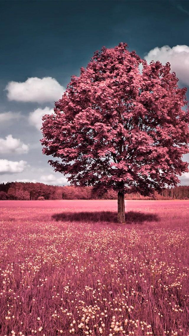 30 best iPhone wallpapers images on Pinterest | Iphone backgrounds ...
