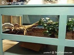 tortoise table - Hledat Googlem