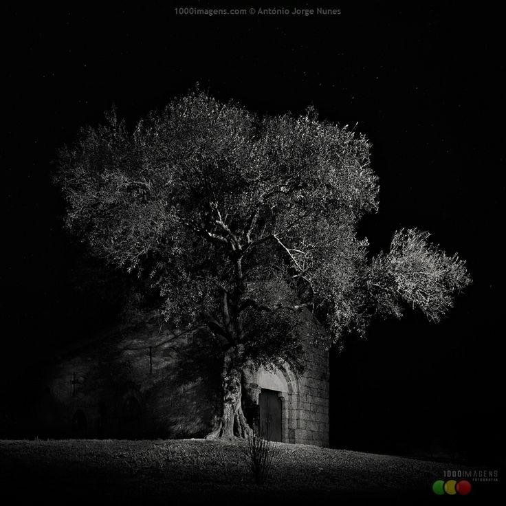 's/t', de António Jorge Nunes