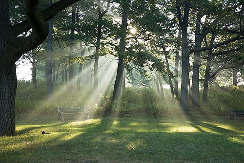 Photo Credit: Stephen Gardiner. CreativeCommons.org http://toneuptoronto.com/2014/07/04/free-yoga-in-high-park-every-sunday-this-summer/