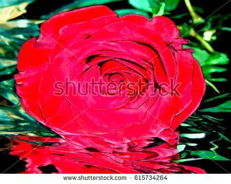 Illustration of a red rose on a silver background