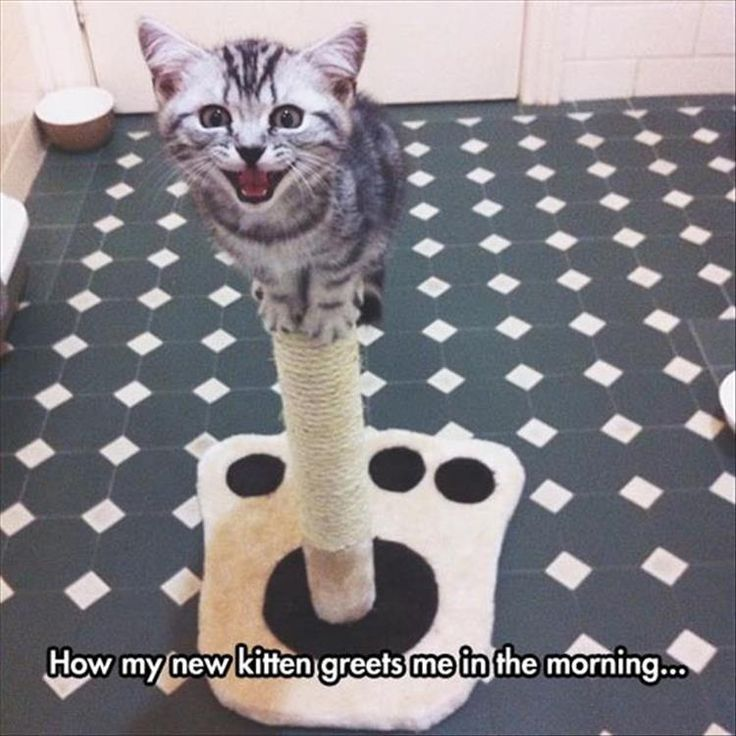 Funny Animal Pictures Of The Day - 30 Pics