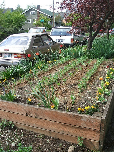 Raised bed in hell strip raised beds pinterest raised beds photos and beds