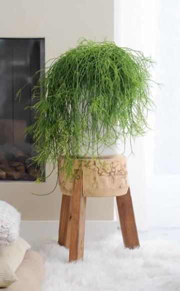 26 besten h ngepflanzen bilder auf pinterest h ngepflanzen zimmerpflanzen und g rtnern. Black Bedroom Furniture Sets. Home Design Ideas