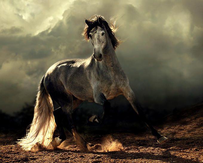 Stunning Horse Photography by Wojtek Kwiatkowski  an artist with light
