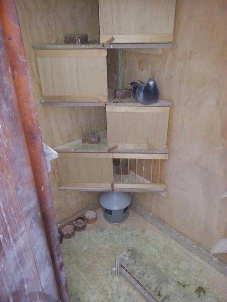 251 best images about interieur duivenhok on pinterest for Pigeon coop ideas