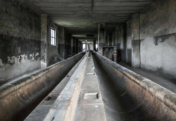 --- Photo by @scorhill_v8 --- Auschwitz II-Birkenau. Inside a brick washroom for prisoners.