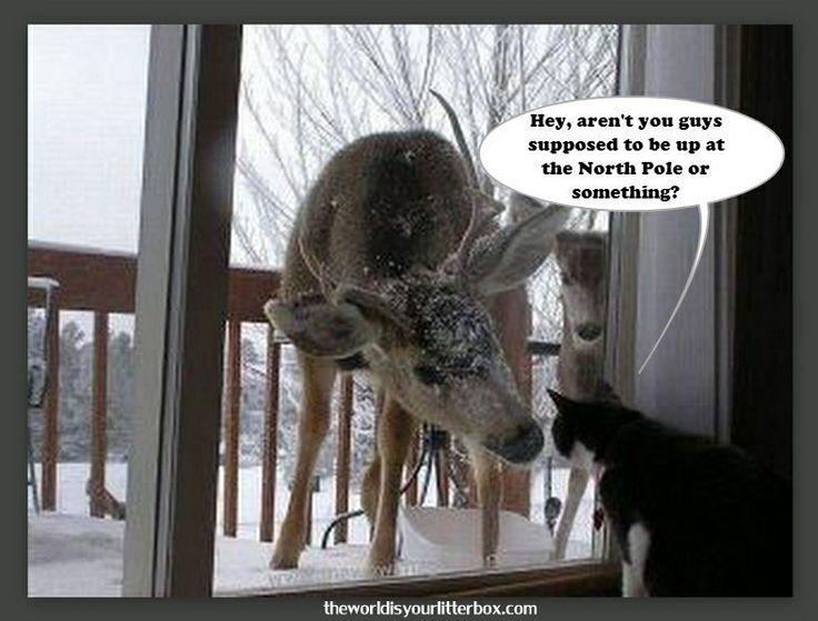 Cat & Reindeer   Comical (& Cute) Cats   Pinterest
