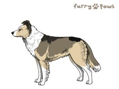 Furry Paws // UCH Kip's Howling Blast [Lla 2xStm - 1.517] 12.2 *BoB* x2's Kennel
