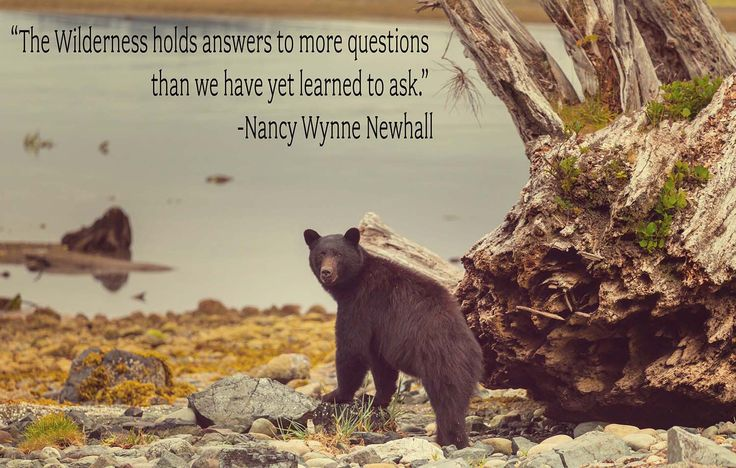 """The Wilderness holds answers"" Quote Vinyl Print"