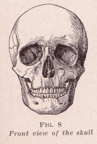 Diagram Of Human Skull Photograph By Graphicaartis Manual Guide