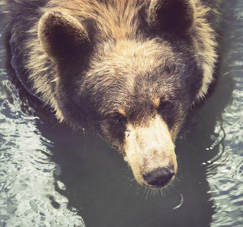 #bear by Lex Miller