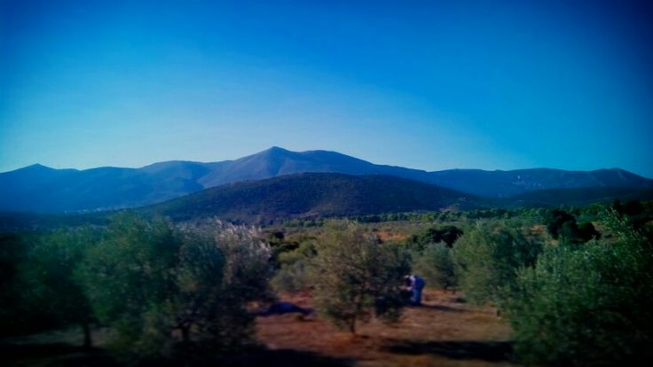 Near the Ancient Theater of Epidavros