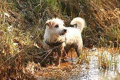 Easy Dogs / Crazy Clou's Thunfischfüllung: Schleckerchenrezept, Easy Dogs Feinschmecker-Guide