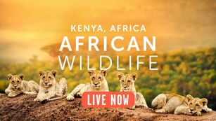 African Animals Camera - Live video from Africa | Explore.org